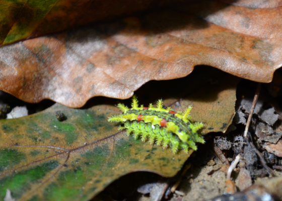This critter was about 1/2 inch long.