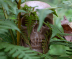Look who's skullking in the bushes.