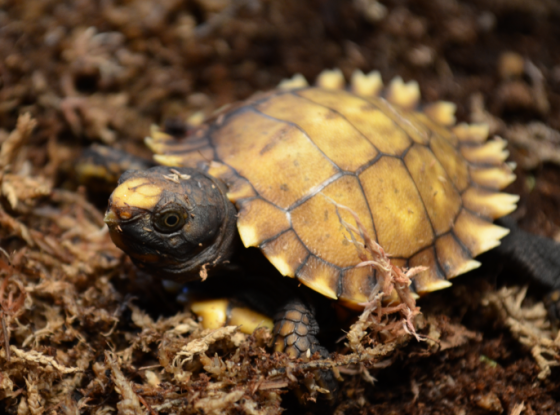 Gratuitous baby tortoise shot. Because when I can't share pics, I get shaky.