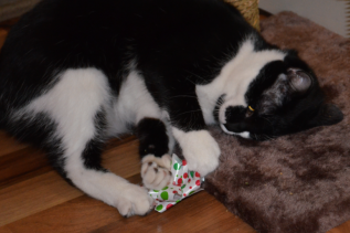 Finally! After much manipulation, coaxing, and catnip, she decided to pick up a bow.