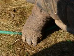 Right hind foot? Check