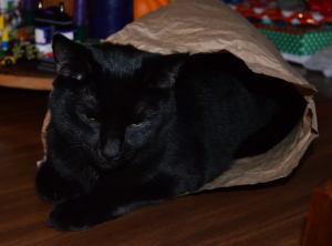 Bellatrix in a bag. She has attached herself to me. And bags.