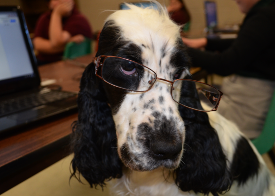 Dottie the Therapy Dog is so ready to write her book. It's a tail-wagging saga of a chicken biscuit.