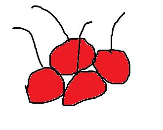 I couldn't find a license-free image of cherries, and they are not available now. so I drew you some.