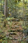 Goshen Prong, Great Smoky Mountains National Park