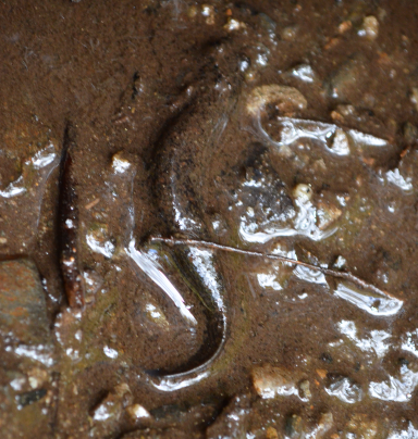Probably a species of Dusky Salamander. These things are EVERYWHERE up here. It's one place where there are more amphibians than tourists.