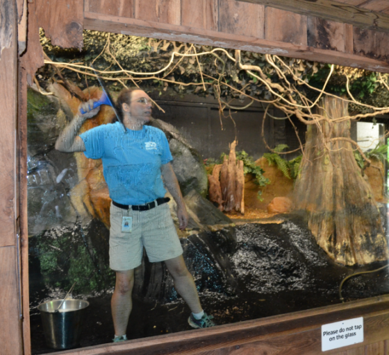 I'm cleaning windows inside the Chinese Alligator exhibit. You know what does a GREAT job on windows? Vinegar and newspaper. NO STREAKING! No, I'm not kidding!