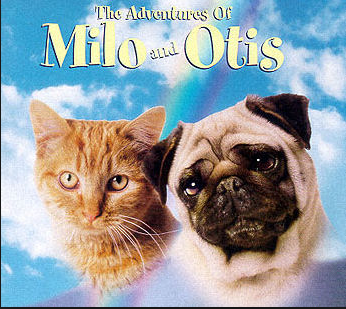 Milo is the cat. I couldn't find anything written by the dog, which is too bad. It's understandable, though. Everyone knows cats are smarter than dogs.