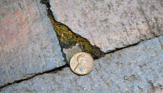 Lucky penny I found on the sidewalk. Heads up, so all the luck is still in it!