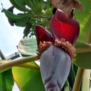 Bananas! This is what they look like when they grow. The flower itself is gorgeous!