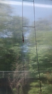 Do you see what I see? Anole just hanging out.