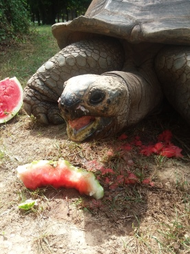 And who got a watermelon?
